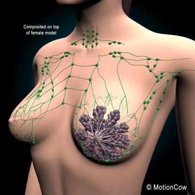 Borstgezondheid, het belang van verzorging van je borsten